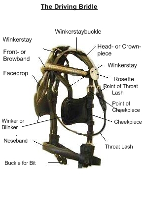 Harness Parts within Draft Horse Harness Parts Diagram