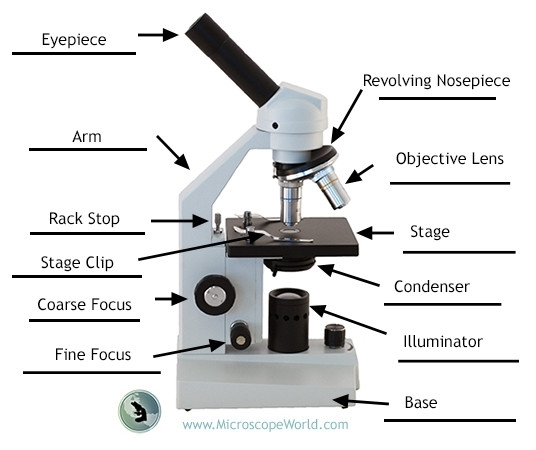 Labeling The Parts Of The Microscopes Including Free Printouts in Diagram Of The Microscope Parts