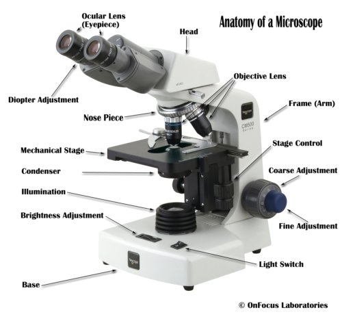 Parts Of A Compound Microscope With Diagram And Functions with Diagram Of The Microscope Parts