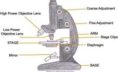A Study Of The Microscope And Its Functions With A Labeled Diagram throughout Diagram Of The Microscope Parts