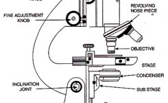 Diagram Of A Compound Microscope intended for Diagram Of The Microscope Parts