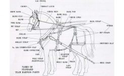 Khp Driving Clinic Participants | Kyhorsepark with regard to Draft Horse Harness Parts Diagram
