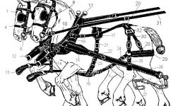 Lilley for Draft Horse Harness Parts Diagram