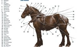 My Draft Horse Super Store: Harness Diagram Draft Work Harness with Draft Horse Harness Parts Diagram