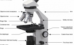 Parts Of A Light Microscope – Microscopy in Diagram Of The Microscope Parts