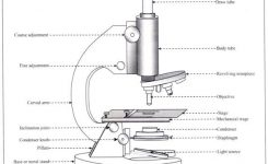 Working Principle And Parts Of A Compound Microscope (With Diagrams) pertaining to Diagram Of The Microscope Parts